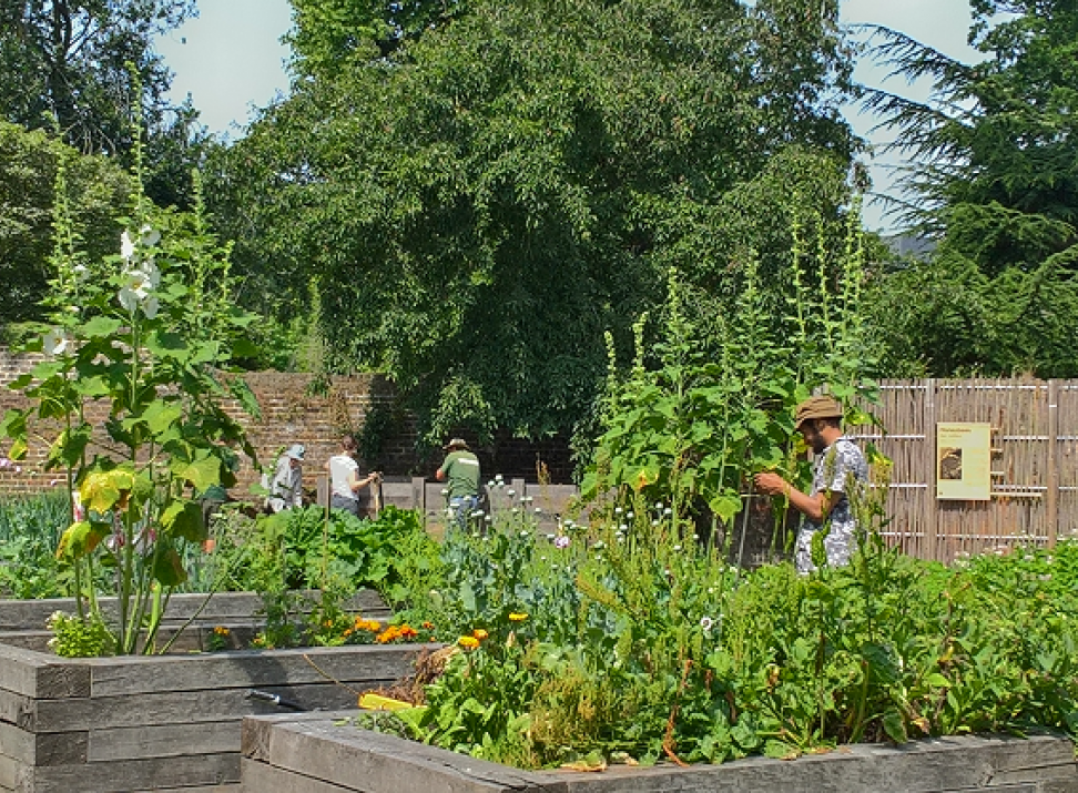 Volunteer gardening at Walpole Park