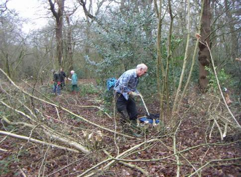 Ian coppicing
